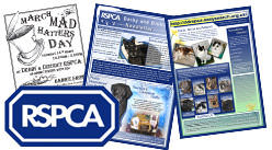 RSPCA Derby newsletter designs