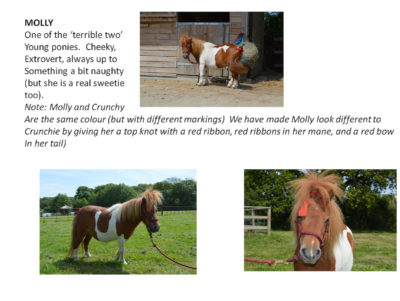 The real ponies on the Isle of Man that the book characters are based on.