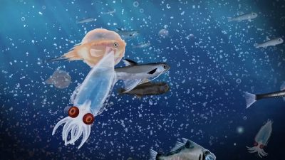 animation about Beth's research into the mesopelagic micronekton
