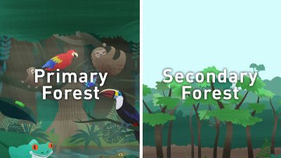 Science Research Explainer: Carbon Storage in Secondary Forest