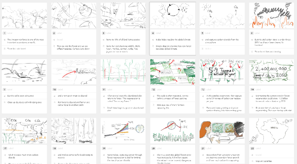 Sketched storyboards for rain forest animation
