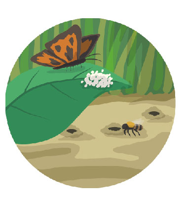 An illustration showing a buttery fly on a leaf with some eggs. A bee is burrowing into a nest in the background.