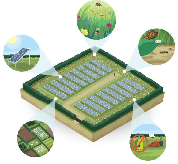 An illustration of a solar park with areas highlighted that benefit pollinators.